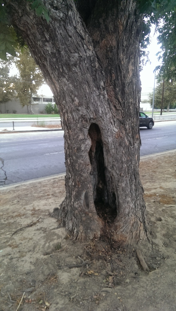 "On Facebook I had to put, ""Hey,...is it just me or does this tree have a vagina?"""