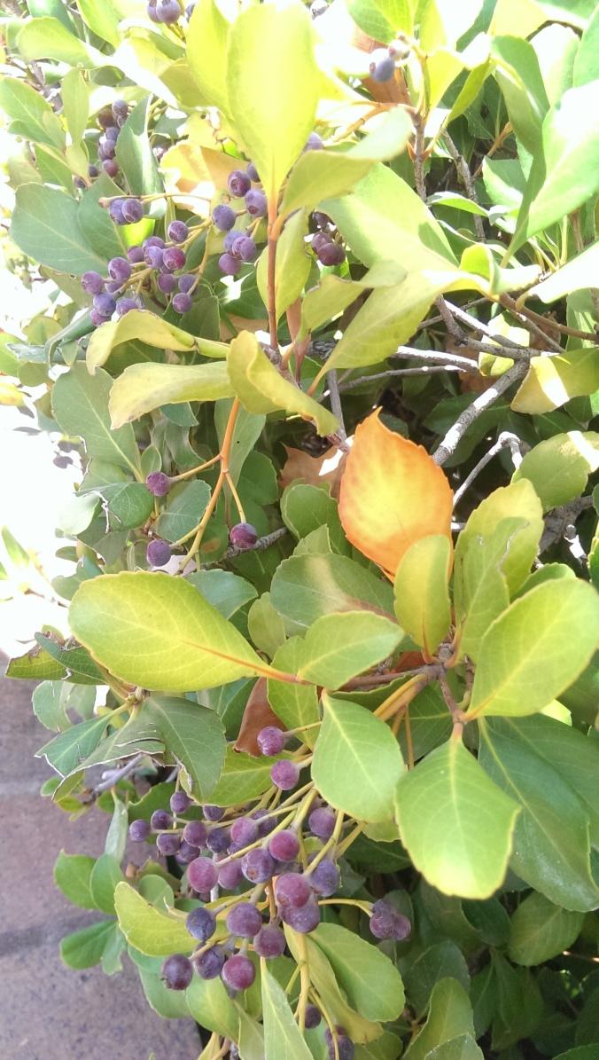 z blog berries
